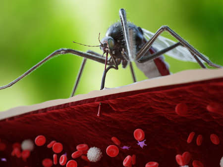 3d rendered medically accurate illustration of a mosquito bite