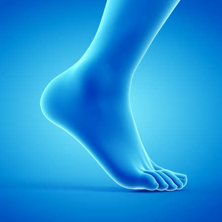 3d renderowana medycznie dokładna ilustracja chodzącej stopy