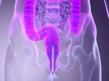 3d rendered medically accurate illustration of a mans colon Stock Photo