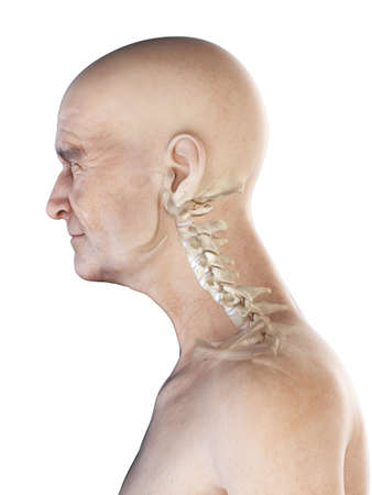 3d rendered medically accurate illustration of an old mans skeletal neck Stockfoto