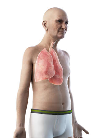 3d rendered medically accurate illustration of an old mans lung