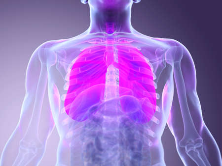 3d rendered medically accurate illustration of a mans lungs
