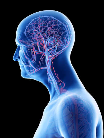 3d rendered medically accurate illustration of an old mans arteries and veins of the head Standard-Bild