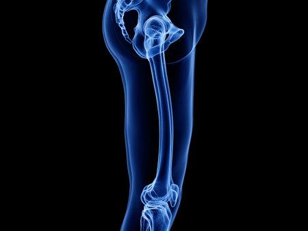3d rendered medically accurate illustration of the upper leg bones Stock Illustration - 128121620