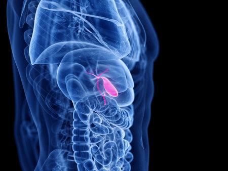 3d rendered medically accurate illustration of the gallbladder 版權商用圖片