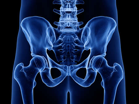3d rendered medically accurate illustration of the skeletal hip Stock Illustration - 128121774