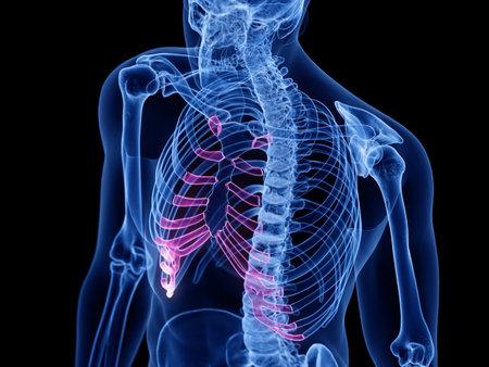 3d rendered medically accurate illustration of the costal cartilage Reklamní fotografie