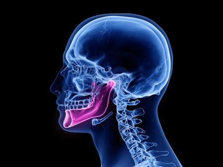 3D gerenderte medizinisch genaue Darstellung des Kieferknochens Standard-Bild