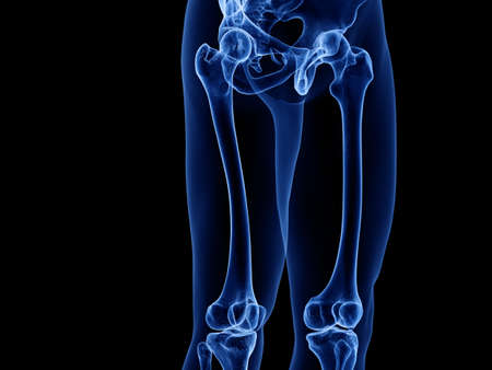 3d rendered medically accurate illustration of the upper leg bones