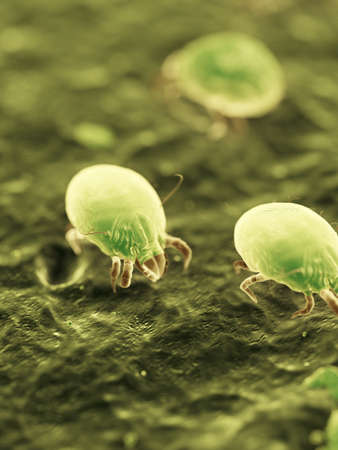 3d rendered medically accurate illustration of dust mites