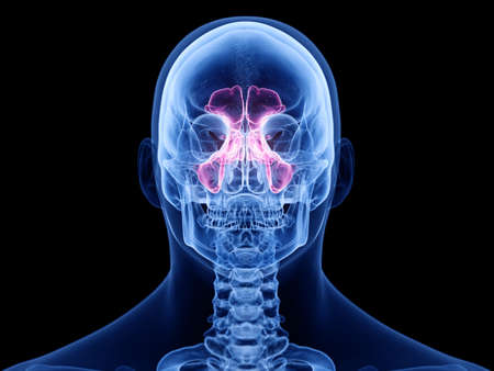3d rendered medically accurate illustration of the sinuses