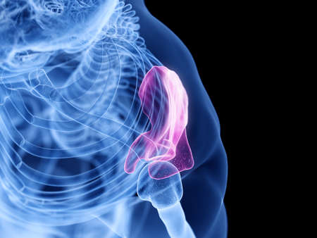 3d rendered medically accurate illustration of the scapula Stock Photo
