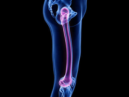 3d rendered medically accurate illustration of the femur Stock Illustration - 128123075