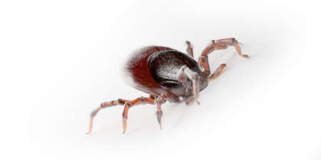 3d rendered illustration of a tick on