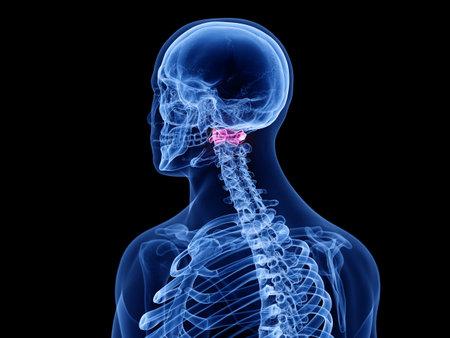 3d rendered medically accurate illustration of the atlas vertebrae Stok Fotoğraf