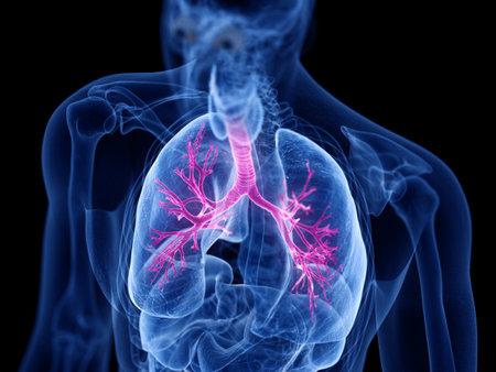 3d teruggegeven medisch nauwkeurige illustratie van de bronchiën