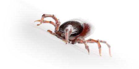 3d rendered illustration of a tick on