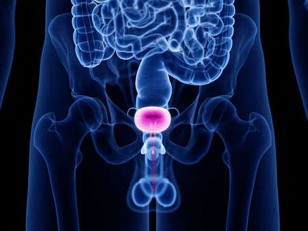 3d rendered medically accurate illustration of the urinary bladder