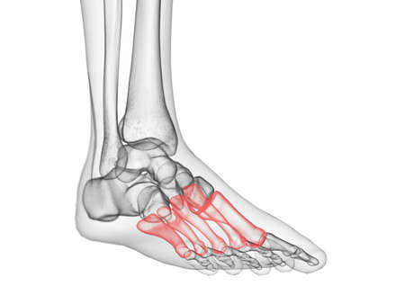 3d rendered medically accurate illustration of the metatarsals bone