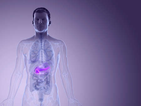 3d rendered medically accurate illustration of the pancreas