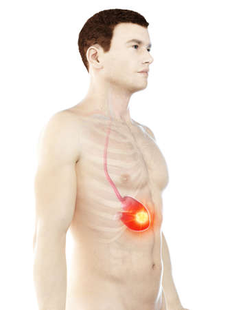 3d rendered medically accurate illustration of a mans stomach