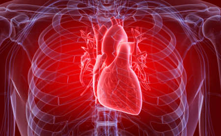 3d rendered medically accurate illustration of the human heart Stock Photo