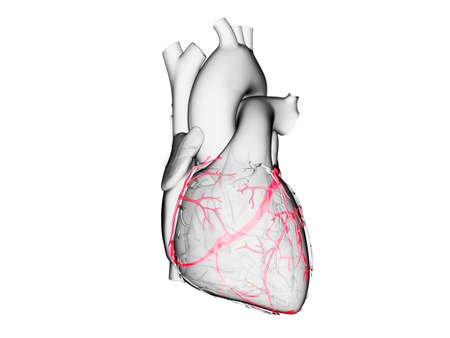 3d rendered medically accurate illustration of the coronary veins Stock Photo