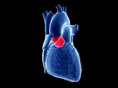 3d rendered medically accurate illustration of the aortic valve Stock Photo