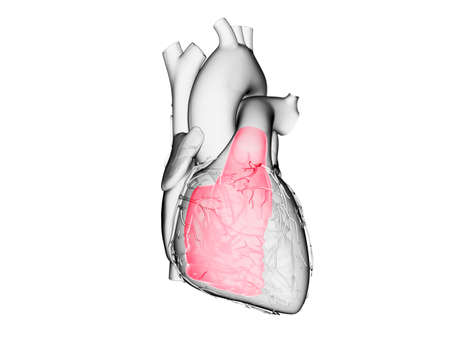 3d rendered medically accurate illustration of the right ventricle Stock Photo