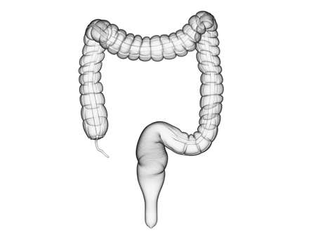 3d rendered medically accurate illustration of the colon Stock Photo