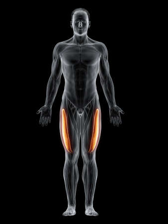 3d rendered muscle illustration of the vastus lateralis
