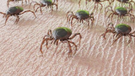 3d rendered illustration of a group of ticks crawling on human skin Reklamní fotografie