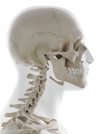 3d rendered medically accurate illustration of the side of the human skull Standard-Bild - 133027994