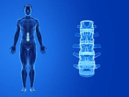 3d rendered medically accurate illustration of the human lumbar spine Standard-Bild - 133028234