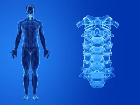 3d rendered medically accurate illustration of the human cervical spine Standard-Bild - 133028418