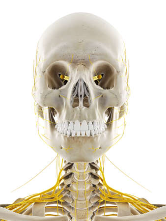 3d rendered medically accurate illustration of the nerves of the head Stock Photo