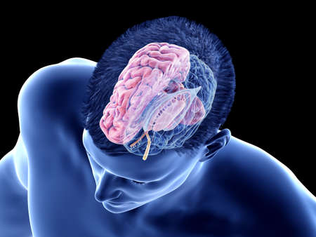 3d rendered medically accurate illustration of the brain anatomy - the internal anatomy