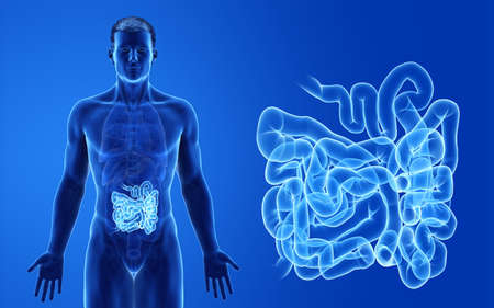 3d rendered medically accurate illustration of the male small intestine Stock Photo