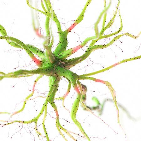 3d rendered illustration of a human nerve cell 版權商用圖片