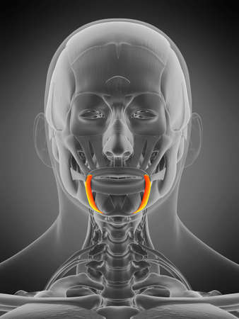 3d rendered medically accurate muscle anatomy illustration - depressor anguli oris 版權商用圖片