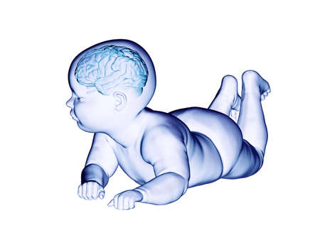 3d rendered medically accurate illustration of the brain of a baby
