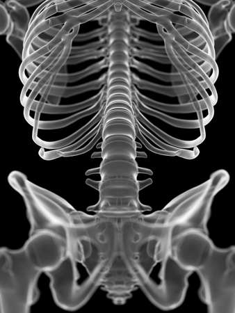 3d rendered medically accurate illustration of the lumbar spine Stockfoto