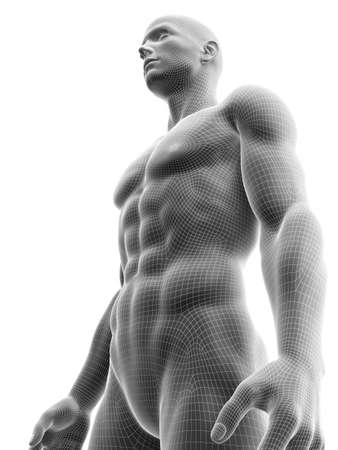 3d rendered medically accurate illustration of a ripped male model