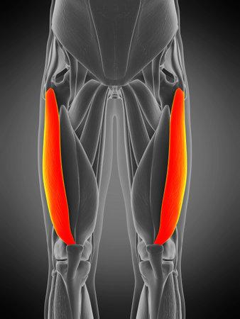3d rendered medically accurate muscle anatomy illustration - vastus lateralis Stock fotó