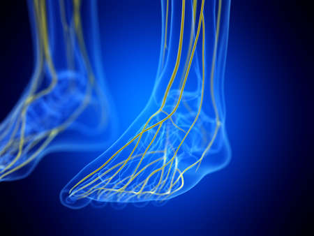 3d rendered medically accurate illustration of the foot nerves Zdjęcie Seryjne