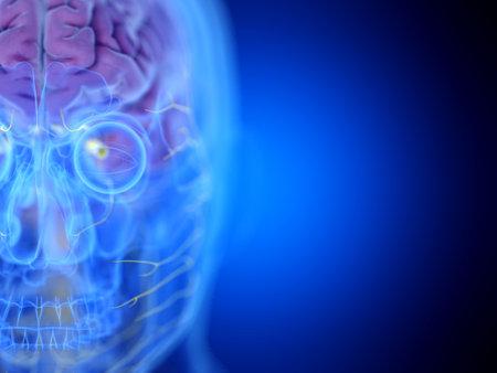 3d rendered medically accurate illustration of the brain Zdjęcie Seryjne