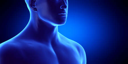 3d rendered medically accurate illustration of the male throat Standard-Bild