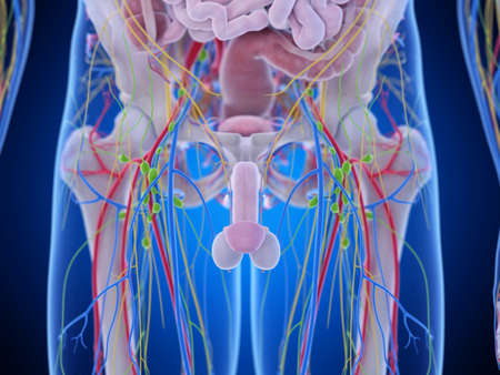 3d rendered medically accurate illustration of the pelvic anatomy