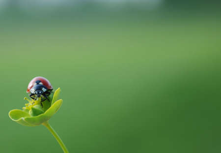 A ladybug posing in front of the camera, looking through the viewfinder. Stock Photo - 5646476