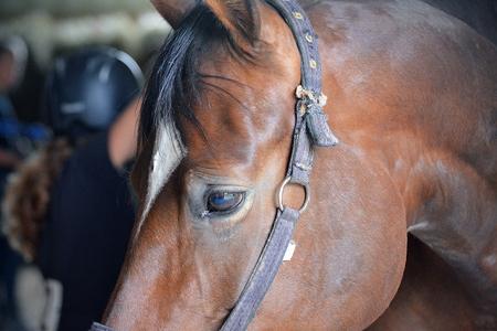 stirrup: Horse Head